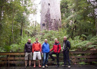 30 NZ Kauribaum 250 m³ 2000 Jahre