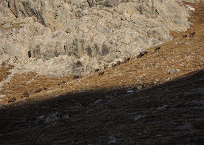 Linderhütte (1)