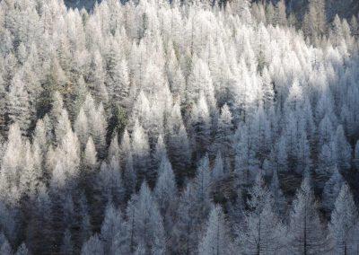 Linderhütte (13)