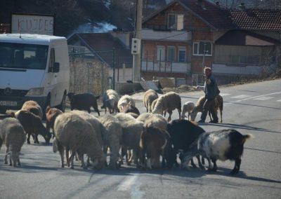 Balkan_(13)